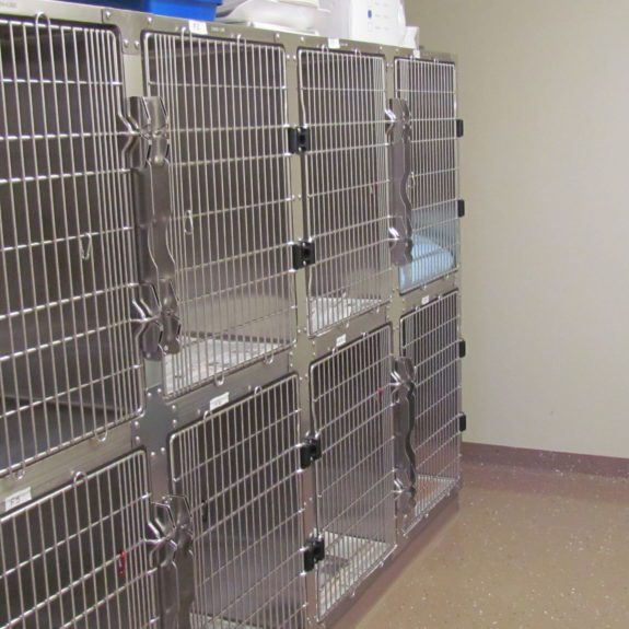 Cat Recovery Suites